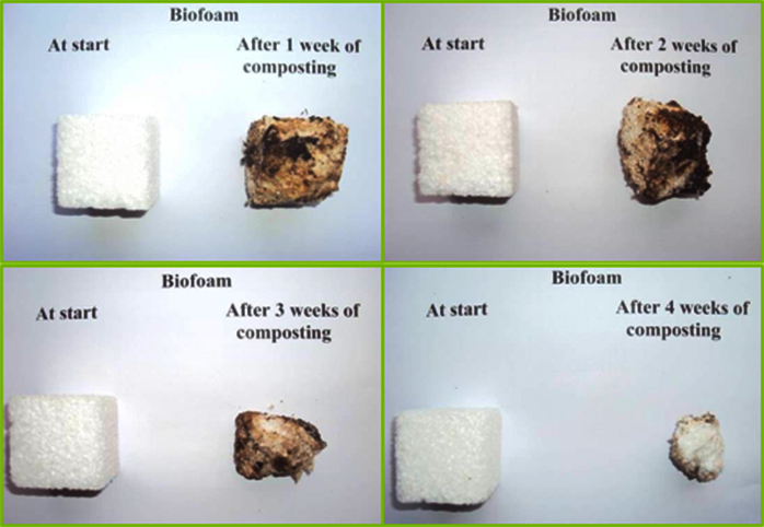 biodegradabilitá biofoam